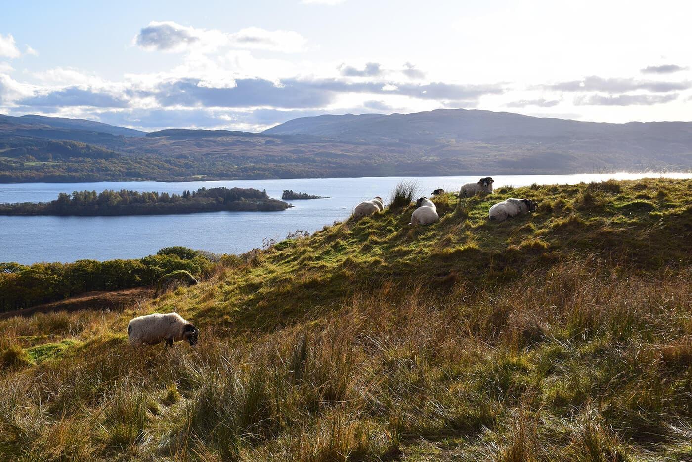 4-Loch Awe