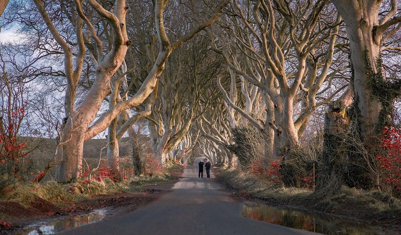 8-Dark Hedges, County Antrim, Northern Ireland